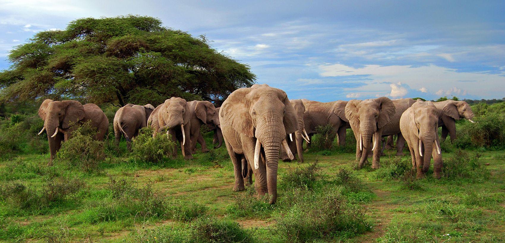 Safari Quénia | 5 Dias | 15.12.16 a 13.12.17: Partidas à 4ª