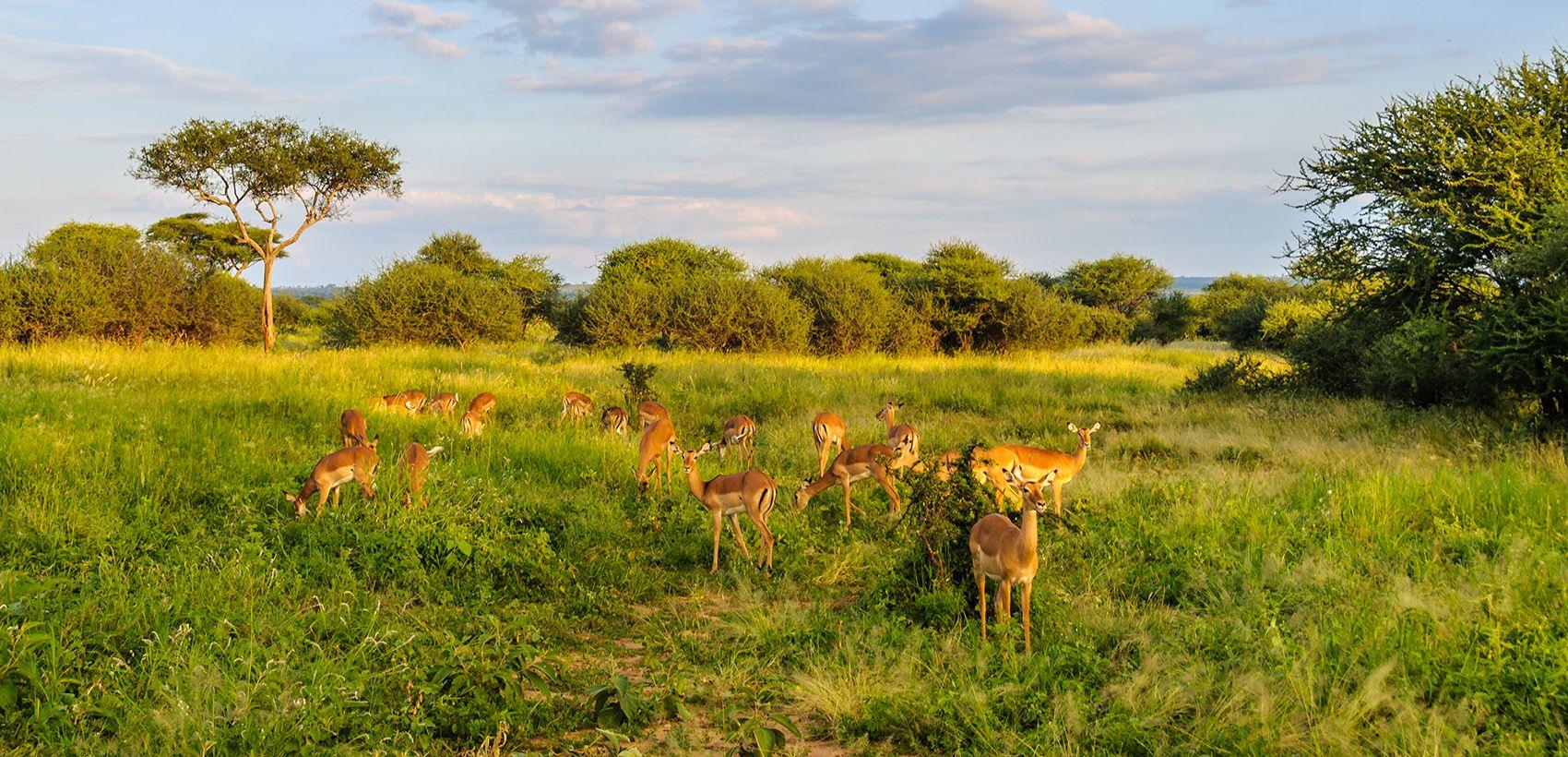 Safari Tanzânia Clássica | 8 Dias